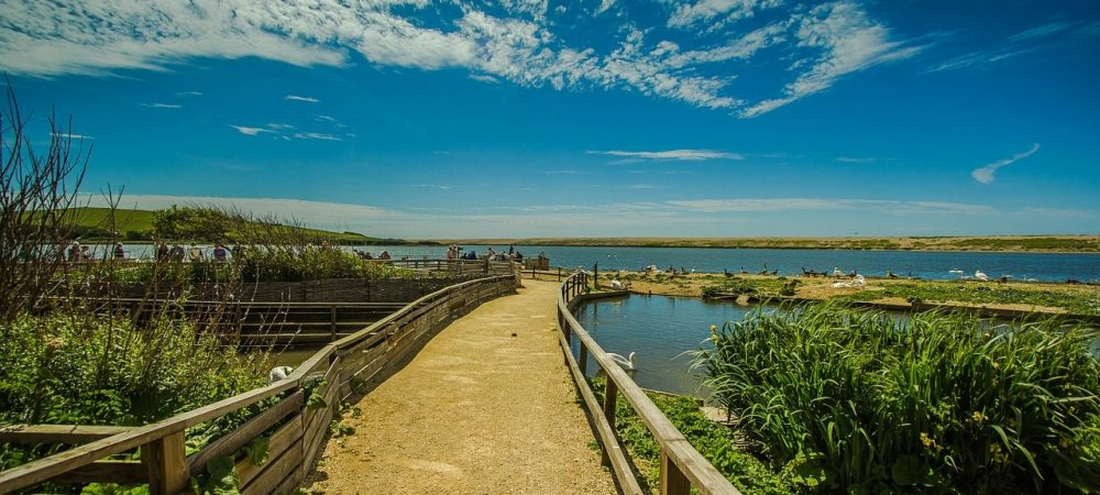 Abbotsbury Swannery. Fun family day out